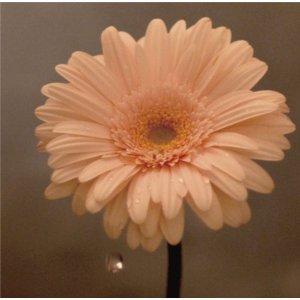 花は咲くプロジェクト/花は咲く